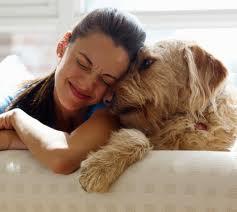 Giarre, contributo di 300 euro per chi adotta un cane randagio