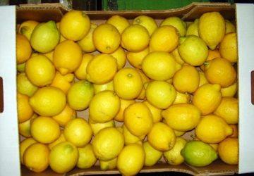 Santa Venerina, due arresti per furto di limoni