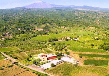 Vino, olio e tartufi tra l'Etna e l'Alcantara