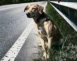 Catania: lega il cane ad un palo e lo abbandona. Denunciata una donna