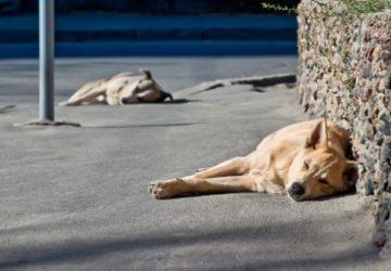 Al via la campagna straordinaria di sterilizzazione dei cani randagi nei Comuni della Provincia