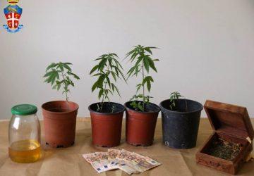 Piedimonte Etneo, deteneva piantine marijuana: arrestata una donna