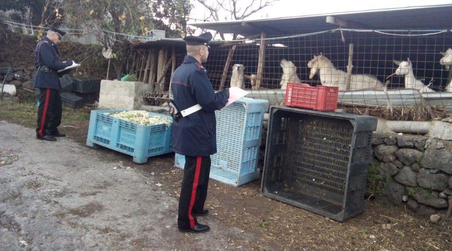 Giarre, controlli serrati di Carabinieri e Guardia di finanza: 10 denunce
