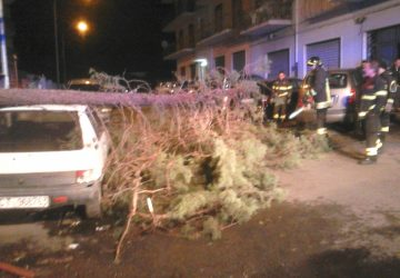 Giarre, forti raffiche di vento nella notte: albero cade sopra due auto in sosta