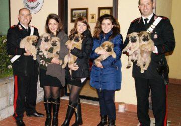 Abbandona 7 cuccioli. Scoperto e denunciato