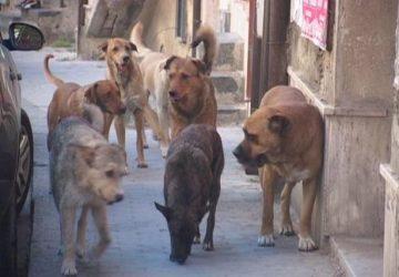Si aggirava per Adrano con cani randagi e pericolosi