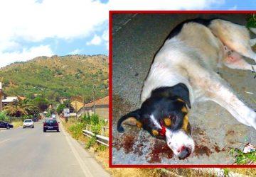 """Francavilla di Sicilia: una serata """"da cani"""""""