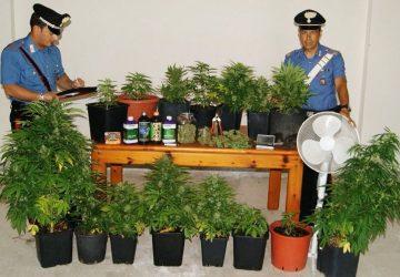 """Acireale: fidanzati dediti alla coltivazione di """"marijuana"""". Arrestati"""
