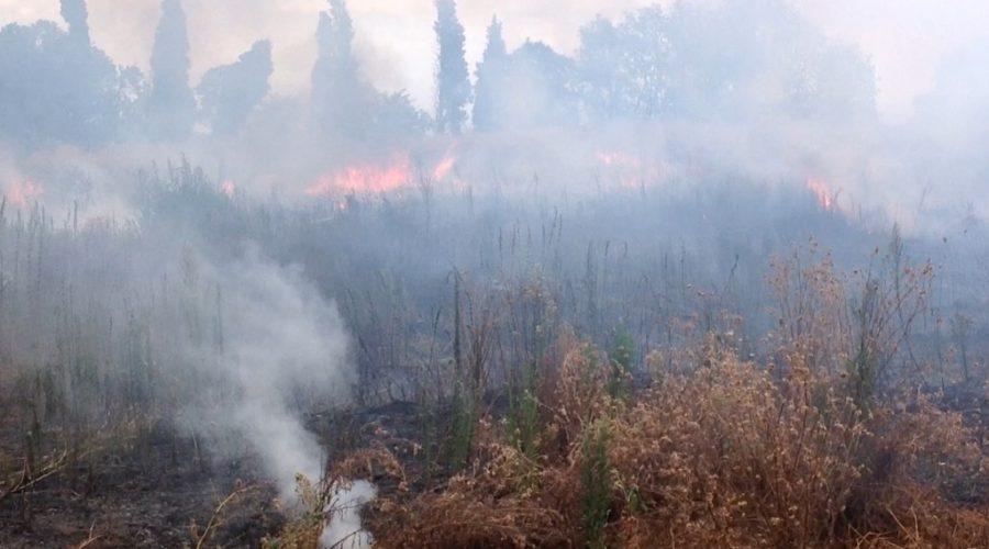 Calatabiano, incendio in un agrumeto: intervento dei vigili del fuoco