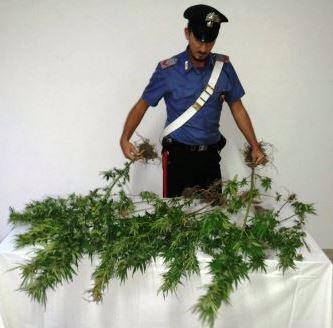Milo, arrestato 50enne acese: aveva realizzato una mini-piantagione di erba