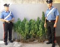 Aci S.Antonio, scoperta mini piantagione fai da te:  due arresti