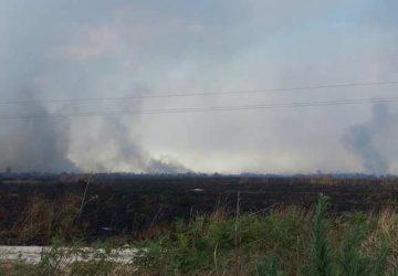 """Devastante incendio nella riserva naturale """"Oasi del Simeto"""". Legambiente non ci sta"""