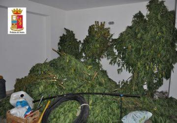 Adrano: rinvenuta piantagione di marijuana. Sequestrati ben 40 kg di droga