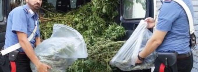 Acireale: arrestato coltivatore di marijuana