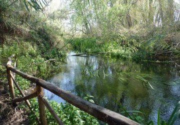 Progetto per la gestione condivisa della riserva naturale orientata fiume Fiumefreddo