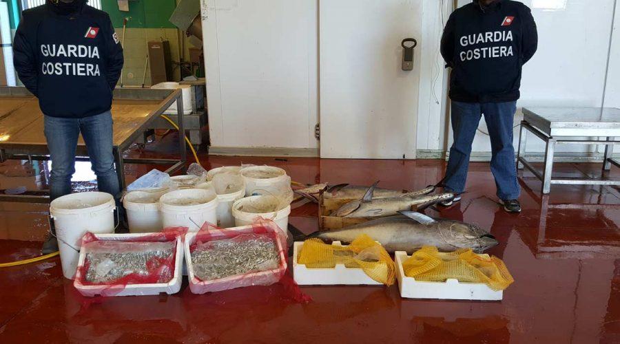 Riposto: sequestrati 300 kg di pesce e novellame pescati illegalmente. Elevate sanzioni per 35.000 euro