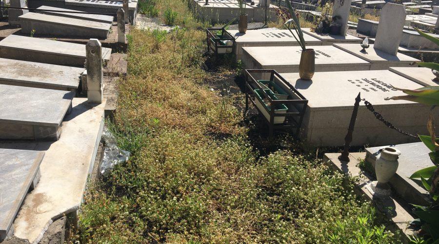 Giarre, il cimitero nel degrado: cittadini indignati VIDEO INCHIESTA