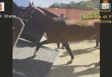 Corse clandestine di cavalli: otto arresti tra le province di Catania, Enna e Caltanissetta VIDEO