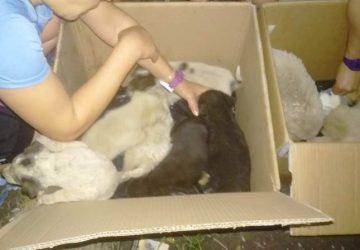 Giarre: dieci cuccioli abbandonati al campo di atletica. E' mobilitazione tra i giovani frequentatori