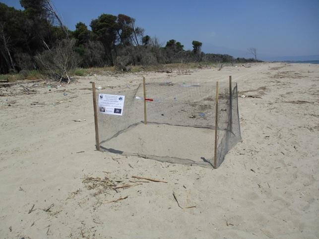 Oasi del Simeto: le tartarughe Caretta caretta hanno scelto ancora di nidificare nell'area protetta