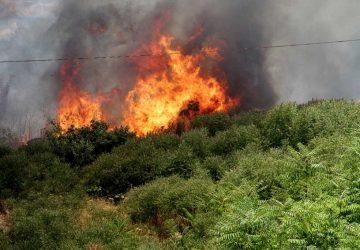 Oasi del Simeto, vasto incendio: intervento della Forestale