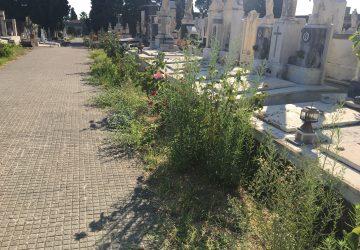 Giarre, cimitero nel degrado: erbacce e aree interdette al pubblico