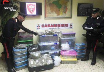 Giarre, colpo dei carabinieri: sequestrati 50 chili di marijuana. Arrestato 43enne ripostese