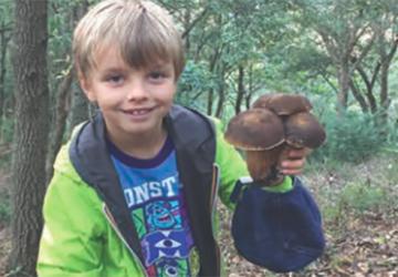 Il piccolo Alfredo e un libro per ragazzi che amano la natura e i funghi
