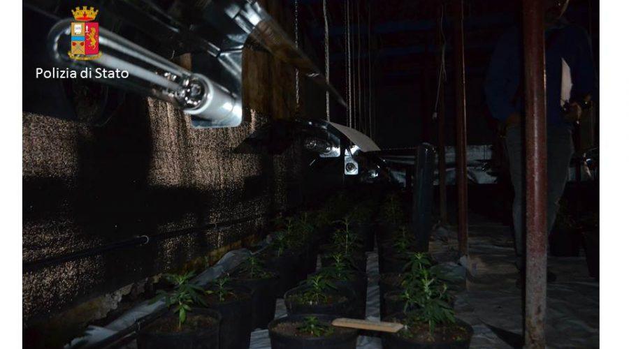Sequestrata piantagione di marijuana in serra: un arrestato VIDEO