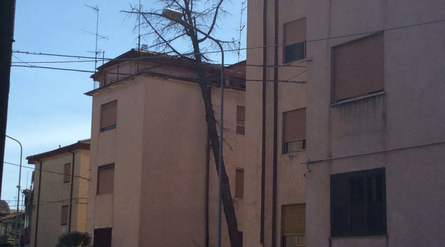 Giarre, pino spezzato dal vento si schianta contro la parete di una palazzina popolare