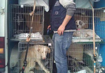 Catania, fermato un furgone che trasportava 20 cani ed un gatto: denunciate 8 persone