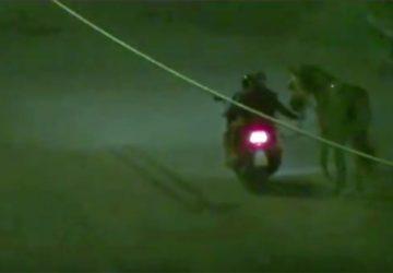 Corse clandestine di cavalli: 6 arresti e 3 divieti di dimora nel messinese VIDEO