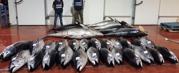 Riposto, nuovo sequestro di tonno rosso. Sanzioni per 8 mila euro