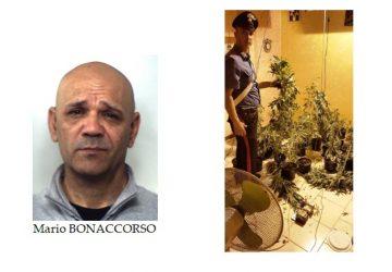 Acireale, coltivava canapa indiana in casa: pregiudicato in manette