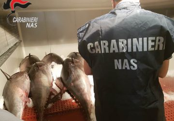 Catania, sequestrate due tonnellate di tonno rosso venduto abusivamente VIDEO