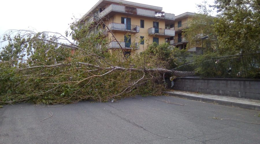 Riposto, forti raffiche di vento, albero abbattuto in via Galeano. Danni anche a Giarre e su A18