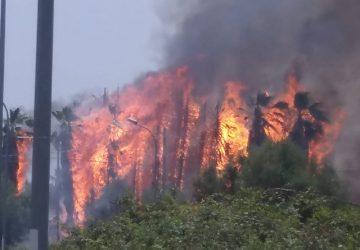Giarre e Riposto: inferno di fuoco per un duplice incendio. Intervento dei VVF e Forestale VIDEO