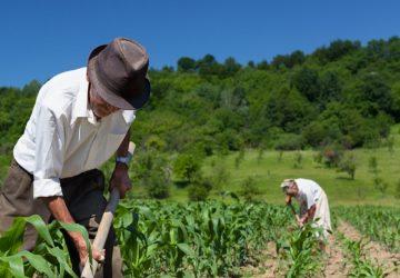 Biologico, Sicilia top in Italia per superfici coltivate