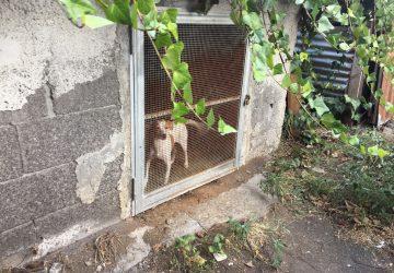 """Giarre, tre cani reclusi al """"41 Bis"""" tra la sporcizia: sequestrati e trasferiti in canile VIDEO"""