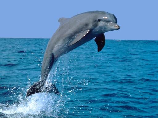 Catania, segnalati maltrattamenti di delfini