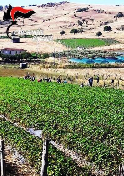 Vasta operazione dei carabinieri sullo sfruttamento dei lavoratori nel settore agricolo e zootecnico a Randazzo e Caltagirone. Otto gli imprenditori denunciati
