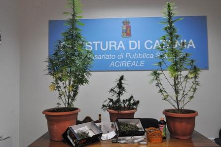 Acireale, coltivazione e detenzione di sostanze stupefacenti: due denunce