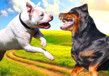 """Alcantara-Jonio: cani pericolosi a spasso, museruola e guinzaglio """"a casa"""""""