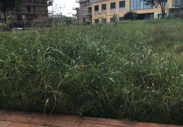 Giarre, plesso Collodi: sospese prove di evacuazione per erba alta VIDEO