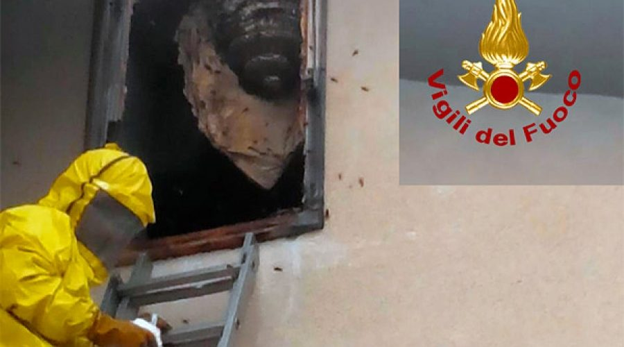 Torre Archirafi, calabroni sulla finestra di una abitazione: intervento dei Vigili del fuoco