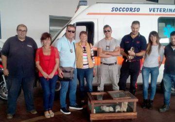 Catania, carabinieri salvano cinque cuccioli di cane abbandonati tra i rifiuti