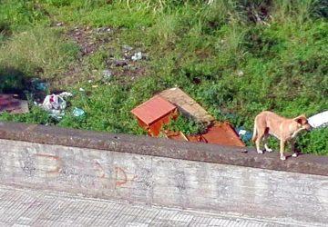 Giarre. Randagismo in Viale Don Minzoni: dodici cani abbandonati a se stessi