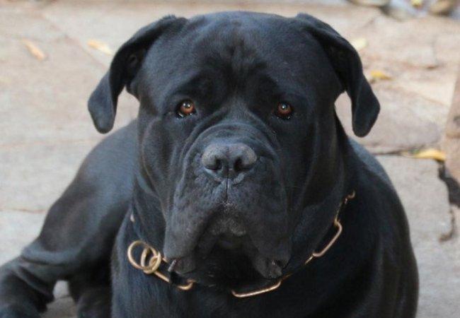 Giarre Chiedono Intervento Dei Vigili Per Un Cane Che Vaga Dentro