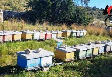 Zafferana, deferito un 50enne per ricettazione: aveva realizzato una azienda di apicoltura abusiva
