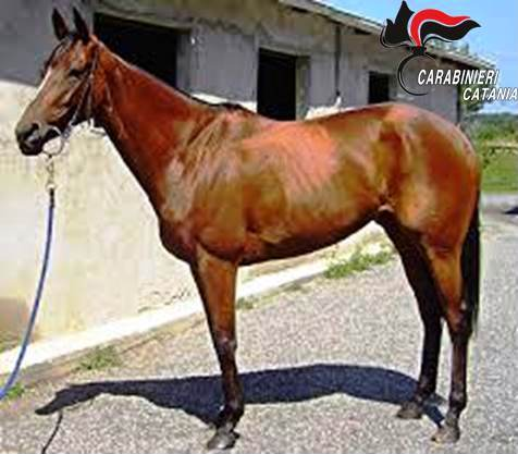 Corse di cavalli clandestine: purosangue sequestrato ad un pregiudicato catanese